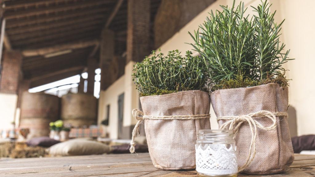 Alecrim sua fragrância auxilia para o bem-estar